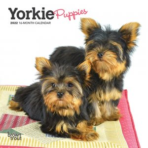 BrownTrout ヨーキーパピー【ミニ】カレンダー Yorkie Puppies