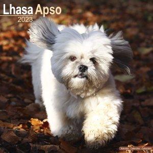 Avonside ラサアプソ カレンダー  Lhasa Apso