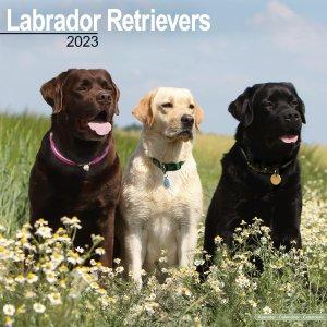 Avonside ラブラドールレトリーバー カレンダー Labrador retriever
