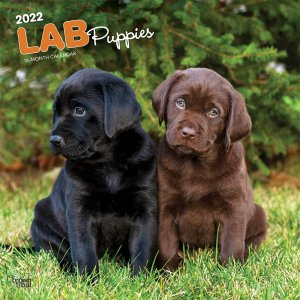 BrownTrout ラブラドールレトリーバー【パピー】カレンダー LAB Puppies