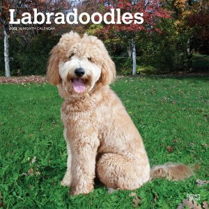 BrownTrout ラブラドゥードゥル カレンダー Labradoodles