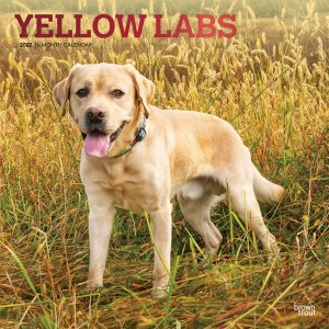 BrownTrout イエローラブ カレンダー Yellow Labs
