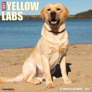 WillowCreek イエローラブ カレンダー JUST Yellow Labs