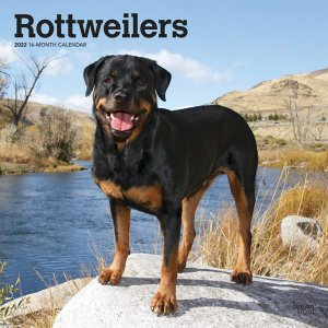 BrownTrout ロットワイラー カレンダー Rottweilers
