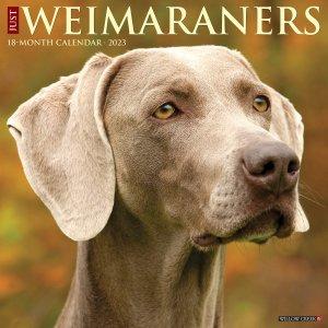 WillowCreek ワイマラナー カレンダー JUST Weimaraners