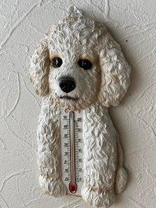 温度計 ビションフリーゼ