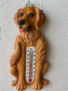 温度計 ゴールデンレトリーバー