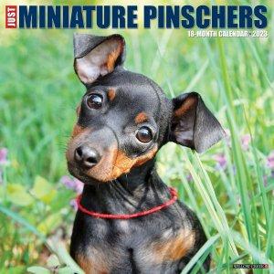 WillowCreek ミニチュアピンシャー カレンダー JUST Miniature Pinschers