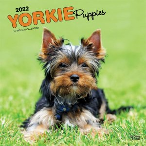 BrownTrout ヨーキー【パピー】 カレンダー Yorkshire Terrier Puppies