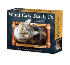 日めくりカレンダー What Cats Teach Us Willow Creek