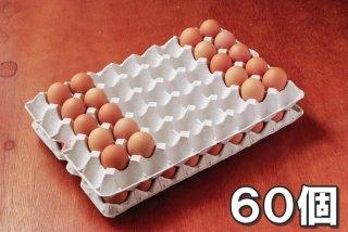 自然卵 60個