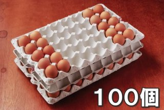 自然卵 100個