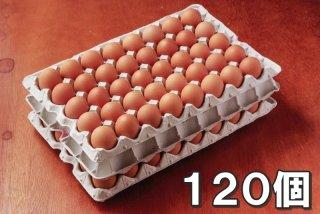自然卵 120個