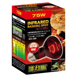 ジェックス エキゾテラ ヒートグロー 赤外線放射 スポットランプ 75W  保温球 昼夜兼用集光型 飼育用品