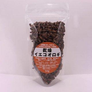オウラファーム 乾燥イエコオロギ L フード