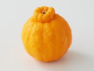 熟成不知火(しらぬい) 1kg