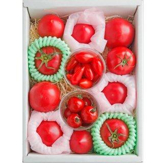 高知県産厳選ブランドトマト12種詰め合わせ
