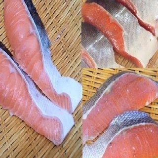 純粋知床産低温熟成塩仕込み 鮭の食べ比べセット ときしらず.めじか.さくらます塩漬 3種類各2切れずつ6切れ