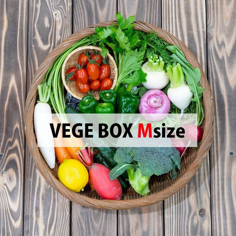 VEGE BOX - M Size 【VEGE STORE】宮崎