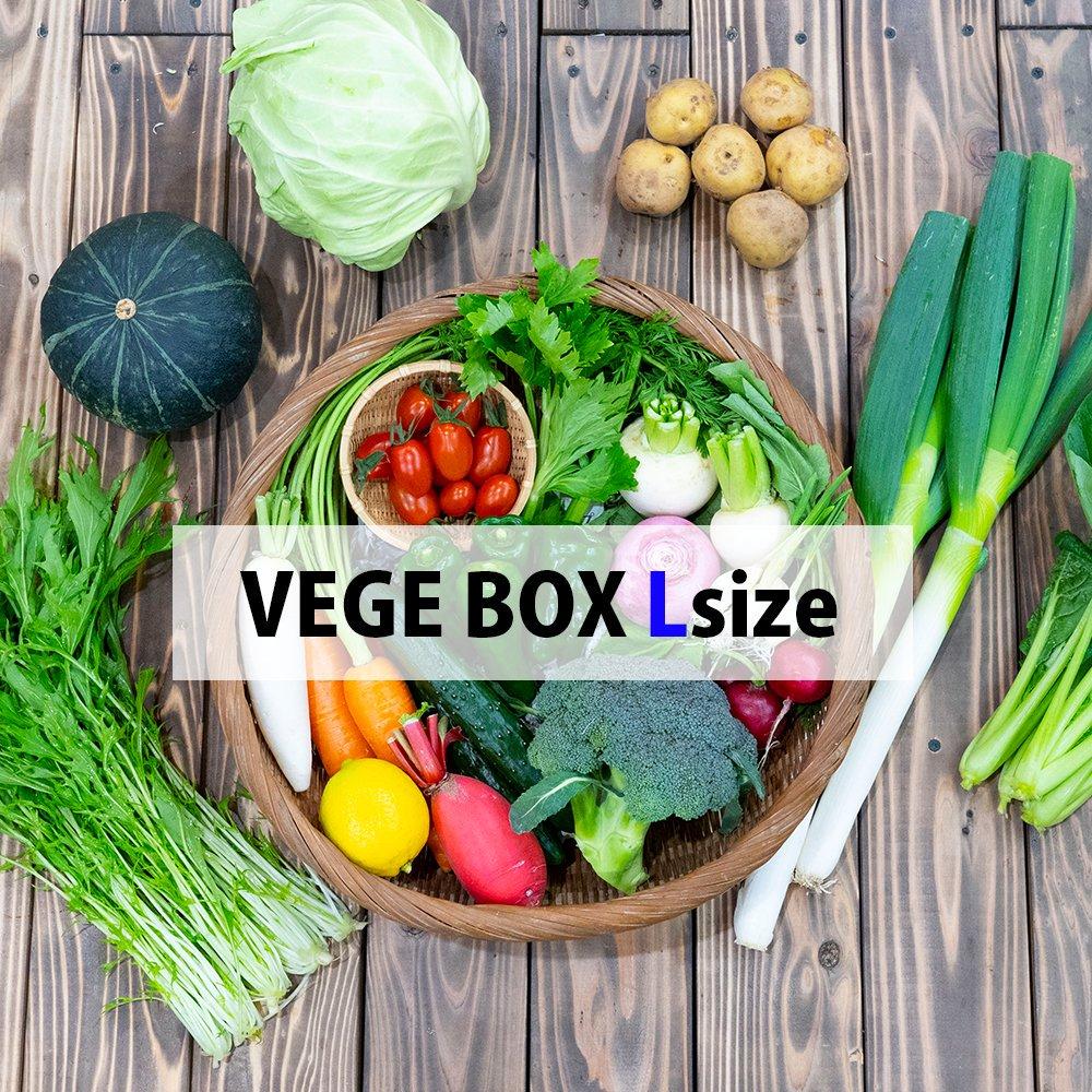VEGE BOX - L Size 【VEGE STORE】宮崎