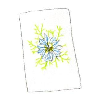 ポストカード(ニゲラ)