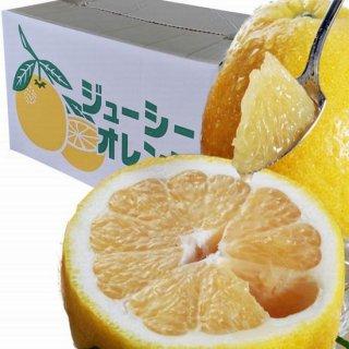 熊本特産 河内晩柑L玉サイズ