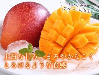 【母の日限定】 マンゴー2玉(2Lサイズ)