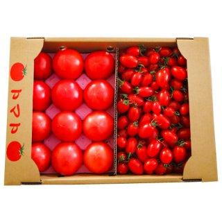 杉田農園 いろはトマト・アイコトマトミックス5kg