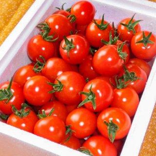 とよはら農園 ミニトマト(1.3kg)