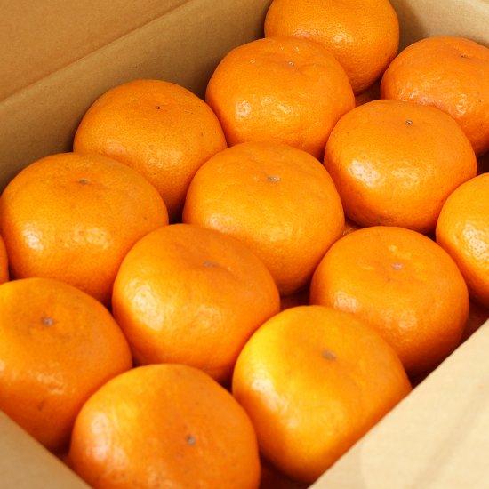 ゆら早生 上 Sサイズ 4.5kg 果実個数 約48個(11/10以降順次出荷予定)