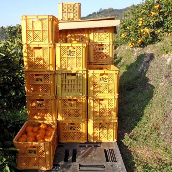 超熟みかん 4kg 大玉3L〜4L混合(2月10日以降出荷予定)