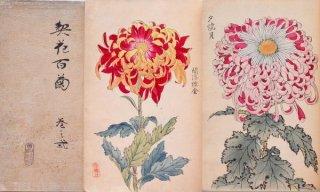 契花百菊  巻之一・二    Keika Hyakkiku  vol.1, 2