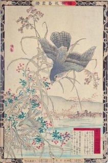 楳嶺花鳥画譜 初版分売 : 冬之部 蘆 (あし) ・鷂 (はいたか)