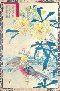 楳嶺花鳥画譜 初版分売 :秋之部 黄蜀葵 (とろろあおい) ・錦雞 (きんけい)