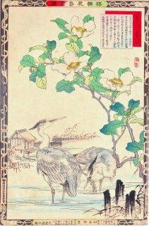 楳嶺花鳥画譜 初版分売 : 冬之部 山茶花 ・蒼鷺 (あおさぎ)