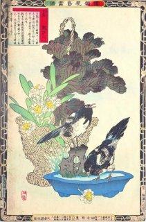 楳嶺花鳥画譜 初版分売 :冬之部 甘籃 (はぼたん) ・鵲 (かささぎ)