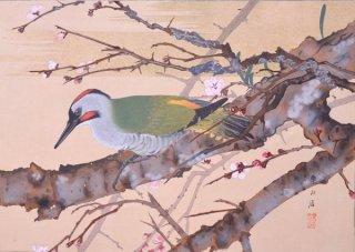 楽山花鳥画譜 分売 : 「紅梅に青啄木(初春)」