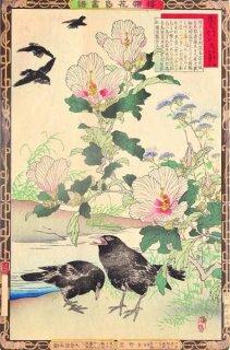 楳嶺花鳥画譜 初版分売 : 秋之部   槿花 (むくげ) ・烏