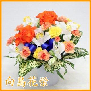 【誕生日・お祝い】オレンジバラの明快なアレンジメント