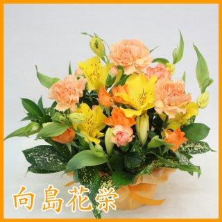 (誕生日・お祝い)オレンジカーネーションとアルストロメリアの明るいアレンジメント