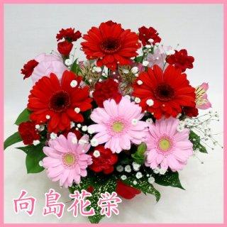 〔誕生日・お祝い〕赤ガーベラとピンクガーベラのアレンジメント