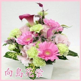 【誕生日・お祝い】ガーベラとカラーの可愛いアレンジメント