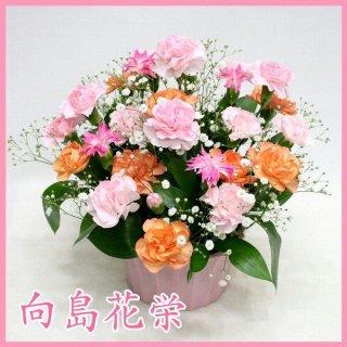 サンクスママ・スプレーカーネーション(ピンク・オレンジ)母の日アレンジメント
