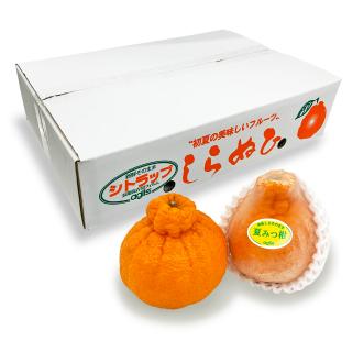 【送料無料】夏みつ柑 5kg箱【不知火】