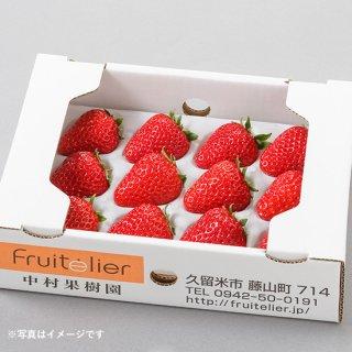 特選 完熟いちごギフト(12玉前後×2箱)〈紅ほっぺ〉