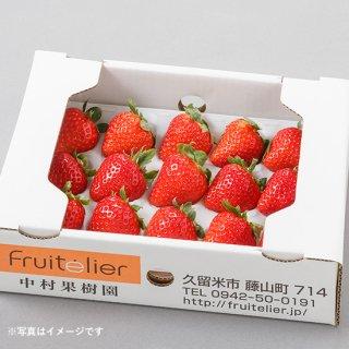 特選 完熟いちごギフト(12玉前後×2箱)〈恋みのり〉