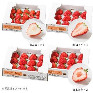 特選 完熟いちご食べ比べギフト(12玉前後×4箱)