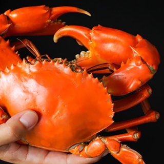 [送料無料] 浜名湖どうまん蟹  / 魚料理専門店「魚魚一(とといち)」の商品画像