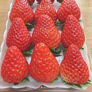 静岡県産いちご「紅ほっぺ」2パック入り(11粒〜15粒×2パック)の商品画像