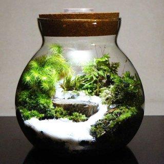 ガラスボトルの苔テラリウム 自然の風景 / 苔庵介る -Scale-の商品画像